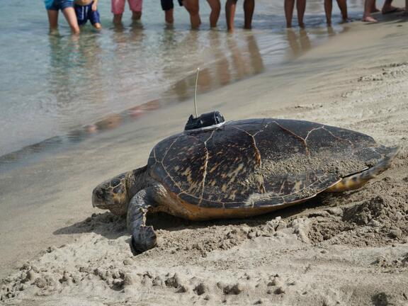 Sea Turtle Conservancy - Image 1